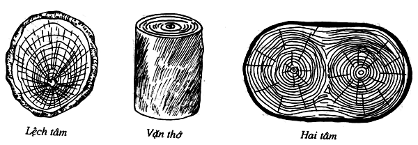Các dạng khuyết tật cơ bản của gỗ